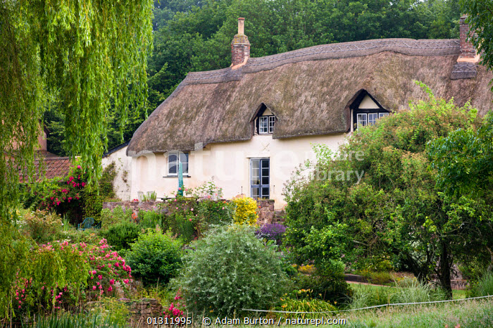 Pretty thatched cottage, and gardens, near Crediton, Devon, England. July 2009, ENGLAND,EUROPE,GARDENS,LANDSCAPES,PICTURESQUE,PRETTY,SUMMER,THATCHED COTTAGES,TRADITIONAL,UK,United Kingdom, Adam Burton