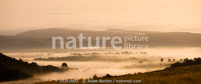 Panoramic view of mist covered countryside at dawn near Llangadog, Brecon Beacons National Park, Carmarthenshire, Wales, UK. August 2009, ATMOSPHERIC,BRECON BEACONS,COUNTRYSIDE,DAWN,EUROPE,FARMLAND,HILLS,LANDSCAPES,MIST,NP,PANORAMIC,UK,UPLAND,WALES,WEATHER ,National Park,United Kingdom, Adam Burton