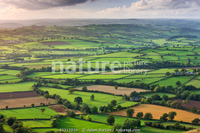 Rolling patchwork of fields near Llangorse, Brecon Beacons National Park, Powys, Wales, UK. October 2009, ATMOSPHERIC,AUTUMN,BRECON BEACONS,COUNTRYSIDE,EUROPE,FARMLAND,FIELDS,GREEN,HEDGEROWS,LANDSCAPES,NP,RURAL,UK,UPLAND,WALES,National Park,United Kingdom, Adam Burton