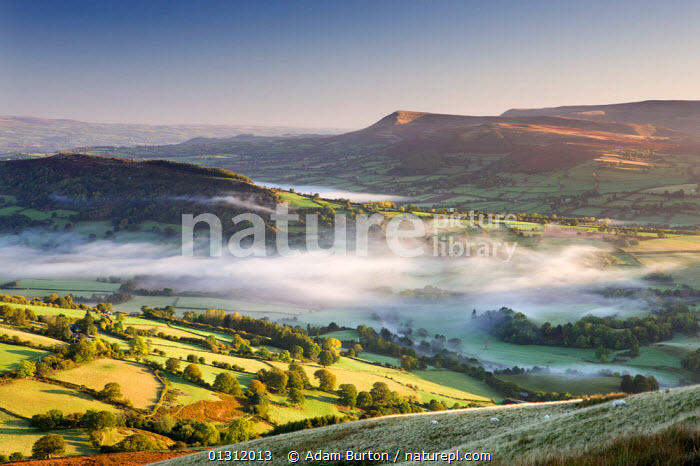 Mist and rolling countryside in the Usk Valley, Brecon Beacons National Park, Powys, Wales, UK. October 2009  ,  AERIALS,ATMOSPHERIC,AUTUMN,BRECON BEACONS,COUNTRYSIDE,EUROPE,FARMLAND,FIELDS,HILLS,LANDSCAPES,MIST,MOUNTAINS,NP,PASTURE,RURAL,SHEEP,UK,UPLAND,WALES,National Park,United Kingdom  ,  Adam Burton