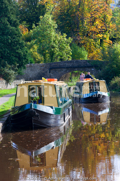 Narrowboat cruising on the Monmouthshire and Brecon Canal, Llangattock, Brecon Beacons National Park, Powys, Wales, UK. October 2009, AUTUMN,BOATS,BRECON BEACONS,BRIDGES,CANAL BOATS,CANALS,COUNTRYSIDE,CRUISING,EUROPE,LANDSCAPES,MOORED,NP,OUTDOORS,PEOPLE,RECREATIONAL,REFLECTIONS,RURAL,TRADITIONAL,UK,UPLAND,VERTICAL,WALES,WATER,National Park,United Kingdom, Adam Burton