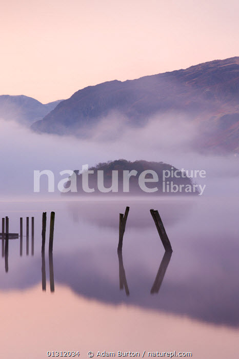 Old wooden jetty and St Herbert's Island on Derwent Water at dawn on a misty morning, Lake District National Park, Cumbria, England, UK. November 2009, ATMOSPHERIC,DAWN,ENGLAND,EUROPE,ISLANDS,JETTY,LAKE DISTRICT,LAKES,LANDSCAPES,MIST,NP,REFLECTIONS,STRUCTURES,UK,UPLAND,VERTICAL,WINTER,WEATHER ,National Park,United Kingdom,core collection xtwox, Adam Burton