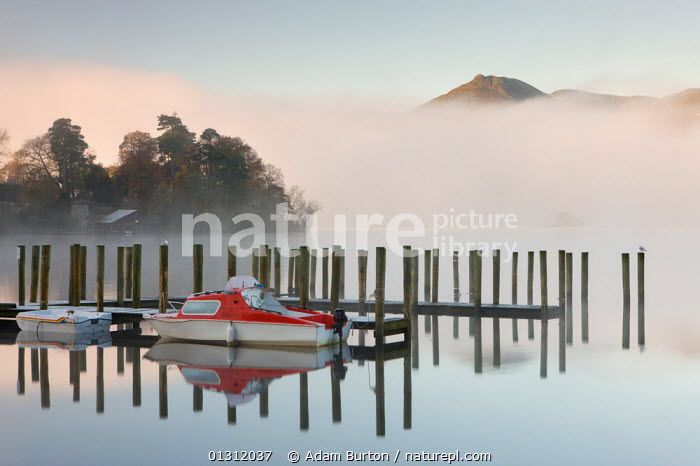 Tethered boats on Derwent Water on a misty morning, Lake District National Park, Cumbria, England, UK. November 2009, ATMOSPHERIC,AUTUMN,BOATS,ENGLAND,EUROPE,LAKE DISTRICT,LAKES,LANDSCAPES,MIST,MIXED BOATS,MOORED,MORNING,MOTORBOATS,MOUNTAINS,NP,REFLECTIONS,SMAL,TENDERS,UK,UPLAND,WEATHER ,National Park,OPEN-BOATS  ,United Kingdom,core collection xtwox, Adam Burton