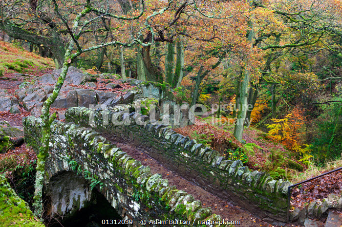 Stone bridge crossing Aira Force waterfall, Lake District National Park, Cumbria, England, UK. November 2009  ,  Aira Force,ATMOSPHERIC,AUTUMN,bridge ,BRIDGES,catalogue3,cumbria,ENGLAND,EUROPE,lake district,LAKES,LANDSCAPES,moss covered,national park,national trust,Nobody,NP,OLD,outdoors,picturesque,Scenic,stone,tourist destination,Travel,TREES,UK,upland,waterfall,WATERFALLS,woodland,WOODLANDS,BOAT-PARTS,PLANTS,United Kingdom  ,  Adam Burton