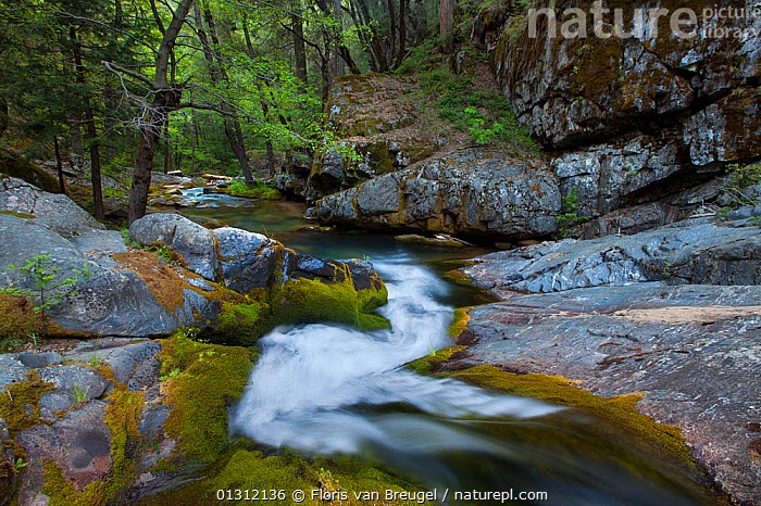 Mossy stream flowing within  King's Canyon National Park, California, USA, May 2009, CANYONS,COLOURFUL,DRAMATIC,FORESTS,GRANITE,LANDSCAPES,LIMESTONE,NORTH AMERICA,NP,STREAM,TIME EXPOSURE,USA,National Park, Floris van Breugel