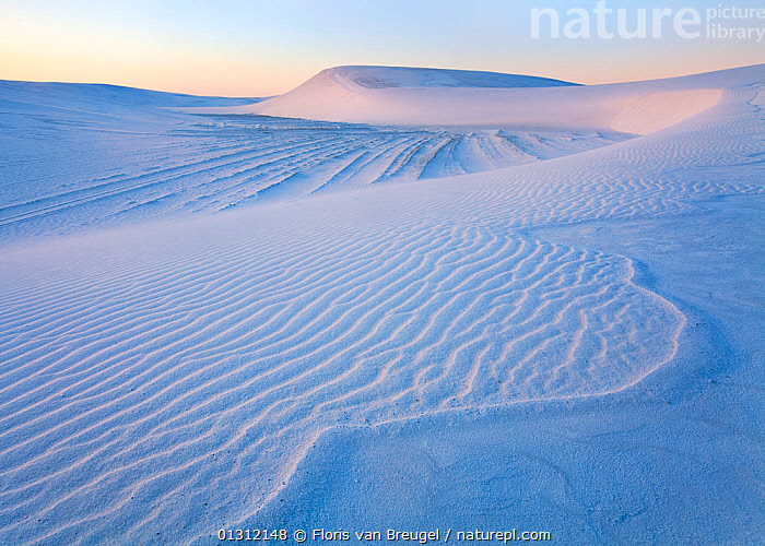 View of snow-like dunes of the White Sands National Monument. These sand grains consist of tiny crystals of gypsum. New Mexico, USA, April 2010  ,  BLUE,DESERTS,DRAMATIC,INTERESTING,LANDSCAPES,NORTH AMERICA,PATTERNS,USA  ,  Floris van Breugel