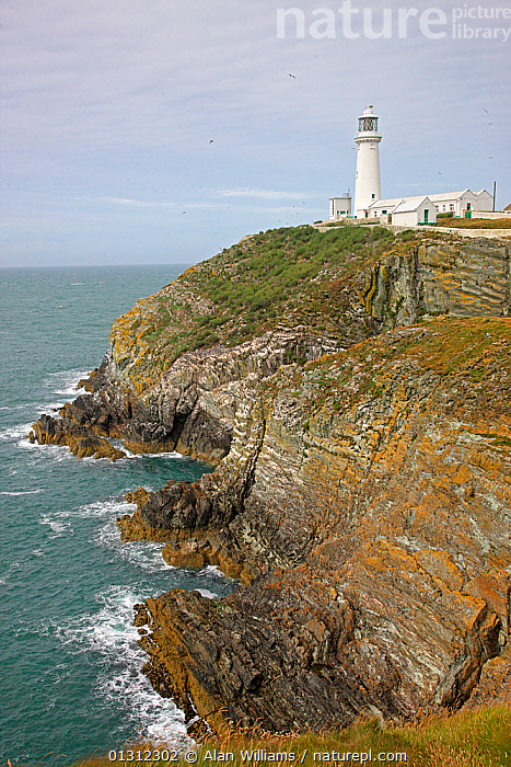 South Stack lighthouse island showing Auk breeding cliffs, Anglesey, North Wales, UK, July 2010, COASTS,EUROPE,ISLANDS,LANDSCAPES,LIGHTHOUSES,SUMMER,UK,WALES,BUILDINGS ,United Kingdom, Alan Williams