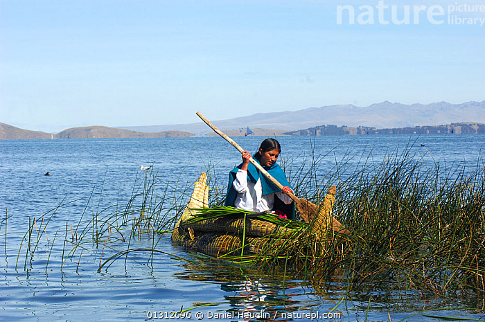 Harvesting of Totora (Schoenoplectus californicus ssp. tatora) by a Aymara indian woman, to be used as food, and thatch, and for building boats, Titicaca lake. Bolivia, South America 2008  ,  BOATS,CULTURES,HARVESTING,LAKES,LIFESTYLE,MAN,NATIVES,OUTDOORS,PEOPLE,SOUTH AMERICA,TRADITIONAL,TRIBES,WOMAN,CONCEPTS ,SOUTH-AMERICA  ,  Daniel Heuclin