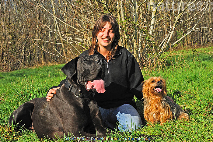 Woman sitting in a field, with her two dogs, a Great Dane, and a Yorkshire terrier, France  ,  CAUCASIAN,COUNTRYSIDE,DOGS,EXTRA LARGE DOGS,FIELDS,LARGE,MIXED BREEDS,OUTDOORS,PEOPLE,PETS,PORTRAITS,SIZE,SMALL,SMALL DOGS,TERRIERS,VARIATION,VERTEBRATES,WOMAN,WORKING DOGS,Europe,Canids  ,  Daniel Heuclin