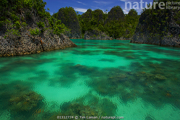 Limestone uplift islands in the Jef Fam group of islands in Raja Ampat Islands, Indonesia, April 2007  ,  ASIA,COASTS,INDONESIA,INDO PACIFIC,IRIAN JAYA,ISLANDS,LANDSCAPES,LIMESTONE,MARINE,OCEANS,SOUTH EAST ASIA,SURFACE,TROPICAL,WATER,SOUTH-EAST-ASIA,NEW-GUINEA  ,  Tim Laman