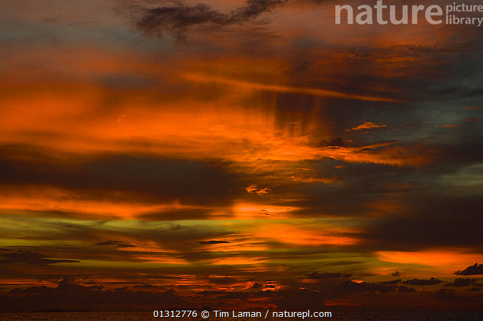 Sunset in Mayalibit Bay, Waigeo Island, West Papua, Indonesia, April 2007  ,  ABSTRACT,ASIA,CLOUDS,COLOURFUL,DRAMATIC,INDONESIA,IRIAN JAYA,LANDSCAPES,SKIES,SOUTH EAST ASIA,SUNSET,Weather,CONCEPTS,SOUTH-EAST-ASIA,NEW-GUINEA  ,  Tim Laman