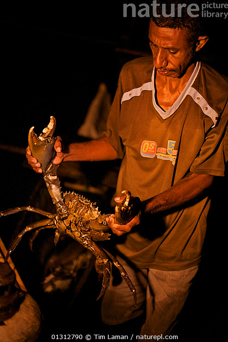 Silas, headman of Kabilo Village holding a Giant Mud Crab, caught whilst spearfishing at night from  canoes in Mayalibit Bay. Waigeo Island, West Papua, Indonesia, April 2007  ,  ASIA,CRABS,FISHING,INDONESIA,INDO PACIFIC,IRIAN JAYA,LIFESTYLE,MARINE,NIGHT,OCEANS,PORTRAITS,SEAFOOD,SOUTH EAST ASIA,TRIBES,TROPICAL,VERTICAL,SOUTH-EAST-ASIA,NEW-GUINEA,CONCEPTS ,core collection xtwox  ,  Tim Laman
