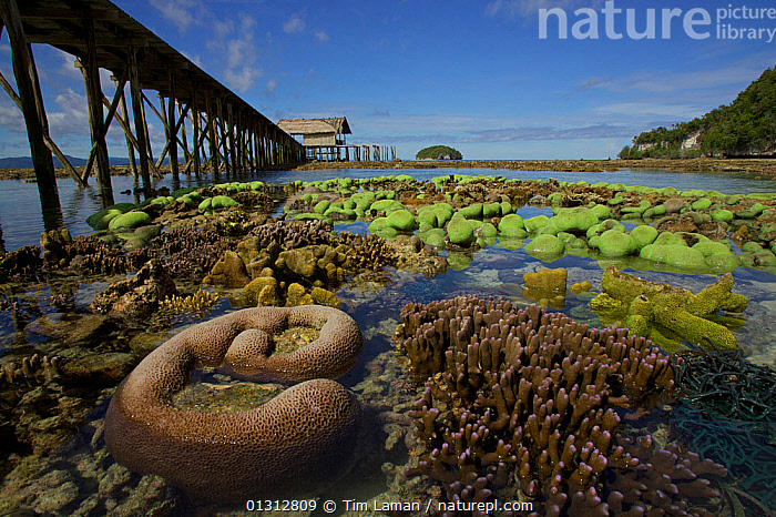 Exposed coral at low tide next to a dock, West Papua, Indonesia, April 2007  ,  ASIA,COASTS,CORAL REEFS,HARBOURS,INDONESIA,INDO PACIFIC,IRIAN JAYA,LANDSCAPES,MARINE,OCEANS,SOUTH EAST ASIA,TIDAL,TIDES,TROPICAL,SOUTH-EAST-ASIA,NEW-GUINEA,core collection xtwox  ,  Tim Laman
