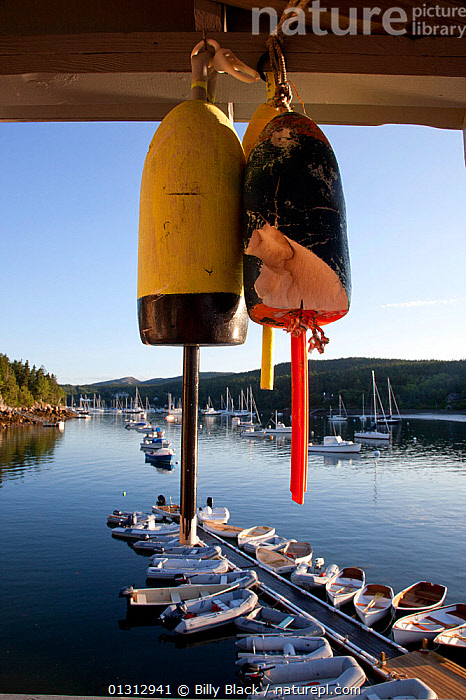 Hanging lobster buoys overlooking Maine harbour. Northeast Harbour, Maine, August 2010.  ,  BOATS,BUOYS,COASTS,CRUISING,EQUIPMENT,FISHING,HARBOURS,JETTIES,MIXED BOATS,MOORED,NORTH AMERICA,OPEN BOATS,SAILING BOATS,TENDERS,USA,VERTICAL,YACHTS,OPEN-BOATS  ,  Billy Black