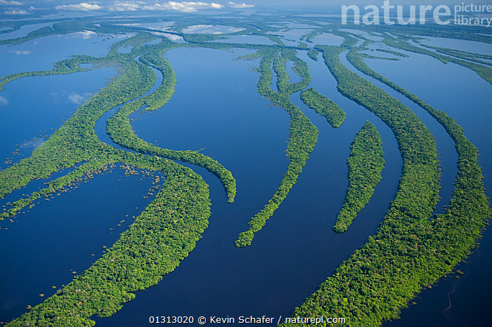 Aerial view of Anavilhanas Archipelago, Flooded forest, Rio Negro, Amazonia, Brazil, July 2008  ,  AERIALS,FLOODS,LANDSCAPES,RIVERS,SOUTH AMERICA,TROPICAL RAINFOREST,VARZEA,WATER,SOUTH-AMERICA  ,  Kevin Schafer