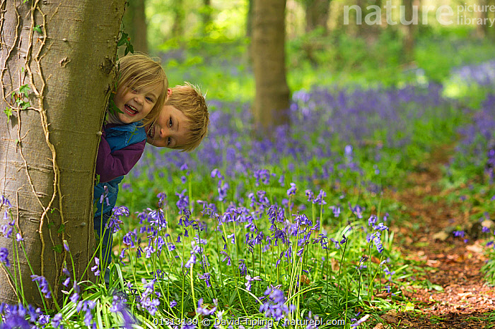 Young boy and girl playing in Bluebell (Hyacinthoides non-scripta) wood, Norfolk, UK, May. Model released.  ,  blonde, BLUE, Boy, brother, catalogue3, Caucasian, child nature, Childhood, CHILDREN, ENGLAND, environment, EUROPE, explore, Exploring, forest, fun, girl, happy, hiding, kid, Laughing, LILIACEAE, looking at camera, may, MONOCOTYLEDONS, Norfolk, outdoors, PEOPLE, PLANTS, playing, siblings, sister, SMILING, SPRING, TREES, treetrunk, two people, UK, woodland, WOODLANDS,United Kingdom  ,  David Tipling