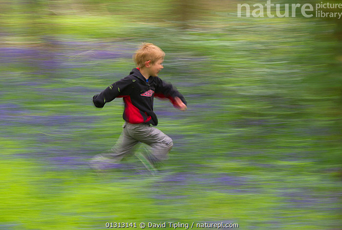 Young boy running through Bluebell (Endymyon nonscriptus) wood. Norfolk, UK, May. Model released  ,  ACTION, BLUE, child nature, CHILDREN, ENGLAND, EUROPE, explore, Exploring, FLOWERS, fun, kid, outdoors, PEOPLE, RUNNING, SPRING, TREES, UK, WOODLANDS,PLANTS,United Kingdom  ,  David Tipling