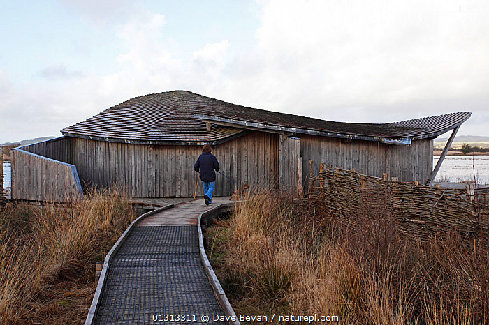 Cors Caron National Nature Reserve, Ceredigion, Wales, UK, main hide on reserve constructed with oak timber frame, January 2010  ,  BUILDINGS,CONSERVATION,CONSTRUCTION,EUROPE,PEOPLE,RESERVE,UK,WALES,WALKWAY,WETLANDS,United Kingdom  ,  Dave Bevan