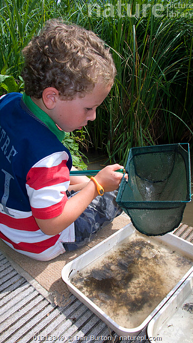 Little boy enjoying a pond safari day at the Arundel Wetlands trust, Sussex, UK, where children go netting and catch species of animals and insects in the ponds. Model released July 2010  ,  BOYS,CATCHING,CAUCASIAN,CHILDREN,EDUCATION,EUROPE,NATURE CHILDREN,NETTING,NEWTS,OUTDOORS,PEOPLE,POND DIPPING,PONDS,SCHOOL AGED CHILD,UK,VERTICAL,WETLANDS,United Kingdom  ,  Dan Burton
