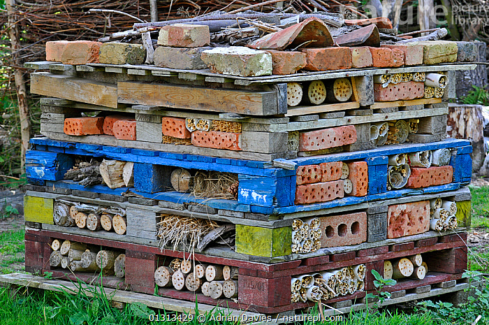 Insect hotel  / Artificial nest holes and shelter for insects and invertebrates, in garden, England, UK, August 2010  ,  CONSERVATION,ENGLAND,EUROPE,GARDENS,HIBERNATION,INSECTS,UK,WILDLIFE GARDENING,WINTER,Invertebrates,United Kingdom  ,  Adrian Davies