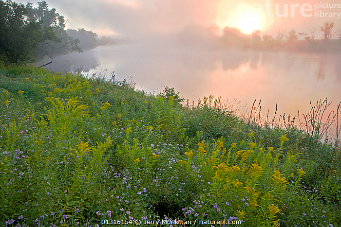 Early morning mist rising from the Connecticut River in Lunenburg, Vermont, USA, August 2007, ATMOSPHERIC,DAWN,FLOWERS,LANDSCAPES,MIST,NEW ENGLAND,RIVERS,SUMMER,SUN,SUNRISE,USA,WATER,WILDFLOWERS,North America, Jerry Monkman