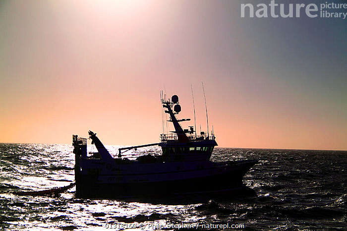 Fishing boat silhouetted against the sinking sun. North Sea, Europe, October 2010.  ,  ATMOSPHERIC,BOATS,DUSK,EUROPE,FISHING BOATS,NORTH SEA,PROFILE,SILHOUETTES,SUNSET,TRAWLERS,WORKING BOATS,WORKING-BOATS  ,  Philip Stephen
