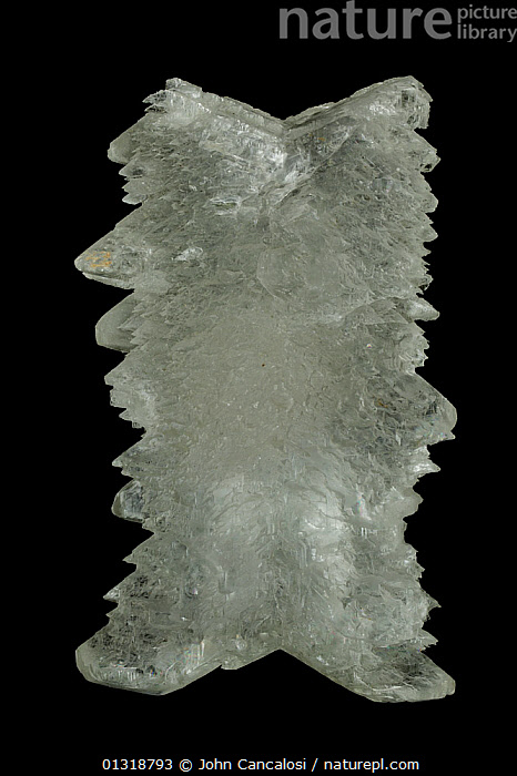 Selenite (CaSO4-2H2O) (Hydrous calcium sulphate) a form of Gypsum, from Mexico, formed in evaporite deposits  ,  CENTRAL AMERICA,CRYSTALS,GEOLOGY,MINERALS,ROCKS,VERTICAL,WHITE  ,  John Cancalosi