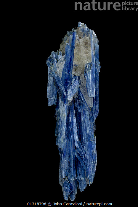 Kyanite crystals (Al2SiO5 / Aluminum silicate) from Brazil, used in making spark plugs, bricks and porcelain  ,  BLUE,BRAZIL,CRYSTALS,GEOLOGY,MINERALS,ROCKS,SOUTH AMERICA,VERTICAL  ,  John Cancalosi