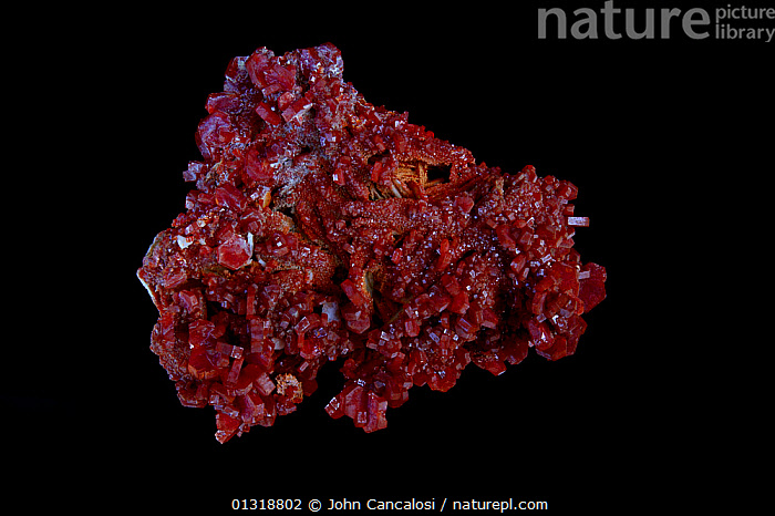 Vanadinite crystals [Pb5(VO4)3Cl / Lead chlorovanadate] from Mibladen, Morrocco - One of the main ores of vanadium and a minor ore of lead  ,  CRYSTALS,GEOLOGY,MINERALS,NORTH AFRICA,RED,ROCKS  ,  John Cancalosi