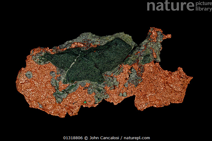 Native Copper (Cu) from Upper peninsula, Michigan, USA, perhaps the most important economically useful metal  ,  GEOLOGY,MINERALS,ROCKS,North America  ,  John Cancalosi