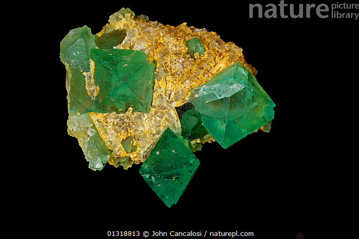 Fluorite crystals  (CaF2 / Calcium fluoride)  from Riemvasmaak, Northern Cape, South Africa. A source of fluorine, used in the manufacture of milk glass, as a flux for the steel industry and in refining of aluminum  ,  CRYSTALS,GEOLOGY,GREEN,MINERALS,ROCKS,SOUTH AFRICA  ,  John Cancalosi