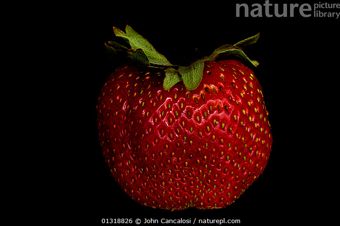 Individual Strawberry (Fragaria sp) fruit, USA  ,  CROPS,CUTOUT,DICOTYLEDONS,EDIBLE,FRUIT,PLANTS,RED,ROSACEAE,USA,North America  ,  John Cancalosi