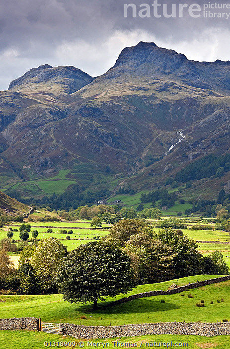 Harrison Stickle and Great Langdale Valley. Lake District, Cumbria, England. September 2010.  ,  ATMOSPHERIC,COUNTRYSIDE,ENGLAND,EUROPE,LANDSCAPES,MOUNTAINS,TREES,UK,VERTICAL,WALL,WALLS,PLANTS,United Kingdom  ,  Merryn Thomas