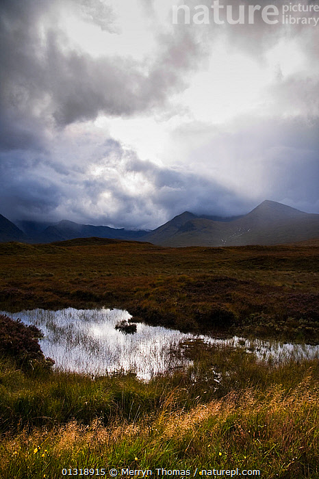 Rannoch Moor on a rainy day. Highlands, Scotland. September 2010.  ,  ATMOSPHERIC,CLOUDS,EUROPE,LAKES,LANDSCAPES,MOORLAND,RAIN,REFLECTIONS,SCOTLAND,SKIES,UK,VERTICAL,WATER,WEATHER,United Kingdom,core collection xtwox  ,  Merryn Thomas