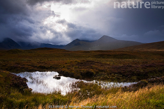 Rannoch Moor on a rainy day. Highlands, Scotland. September 2010.  ,  ATMOSPHERIC,CLOUDS,DRAMATIC,EUROPE,LAKES,LANDSCAPES,MOORLAND,RAIN,REFLECTIONS,SCOTLAND,SKIES,UK,VERTICAL,WATER,WEATHER,CONCEPTS,United Kingdom,core collection xtwox  ,  Merryn Thomas