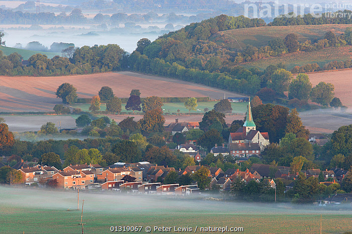 Dawn mist on the fields around the village of South Harting. South Downs, Sussex, UK, September 2009.  ,  AGRICULTURE,BUILDINGS,catalogue4,Community,COUNTRYSIDE,DAWN,elevated view,EUROPE,Field,landscape,LANDSCAPES,MIST,misty,Nobody,PEACEFUL,rooftops,rural,Scenic,South Harting,TREES,UK,village,VILLAGES,PLANTS,United Kingdom  ,  Peter Lewis