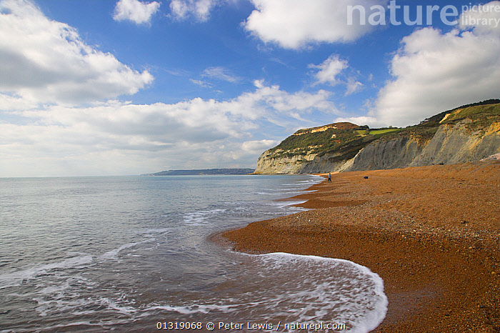 A view along Chesil Beach towards the Golden Cap, with Lyme Regis in the distance. Dorset, UK, October.  ,  BEACHES,CLIFFS,COASTS,COUNTRYSIDE,EUROPE,LANDSCAPES,one,outdoors,PEOPLE,sea,seas,seascapes,UK,WATER,Geology,United Kingdom,,Dorset and East Devon Coast, UNESCO World Heritage Site,  ,  Peter Lewis