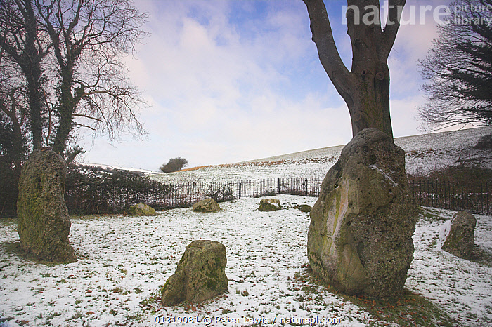 The Nine Stones in winter snow. Erected possibly 1000 BC. Near Winterbourne Abbas, Dorset, UK, January 2010.  ,  ancient,archaeology,Civilisation,COUNTRYSIDE,Culture,EUROPE,LANDSCAPES,mystical,NP,ROCKS,SNOW,standing stones,stones,TREES,UK,National Park,PLANTS,United Kingdom  ,  Peter Lewis