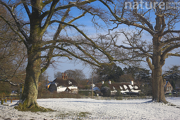 Swan Green in winter snow. New Forest, Hampshire, UK, January 2010.  ,  BUILDINGS,cottages,COUNTRYSIDE,EUROPE,LANDSCAPES,NP,Thatch,TREES,UK,VILLAGES,WINTER,National Park,PLANTS,United Kingdom  ,  Peter Lewis
