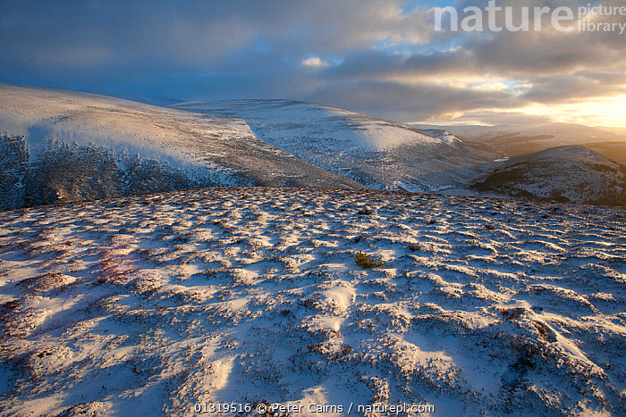Snow-covered moorland. Glenfeshie, Cairngorms National Park, Scotland, January 2008.  ,  ATMOSPHERIC,CLOUDS,EUROPE,HIGHLANDS,LANDSCAPES,MOORLAND,NP,RESERVE,SCOTLAND,SNOW,UK,WINTER,Weather,National Park,United Kingdom  ,  Peter Cairns