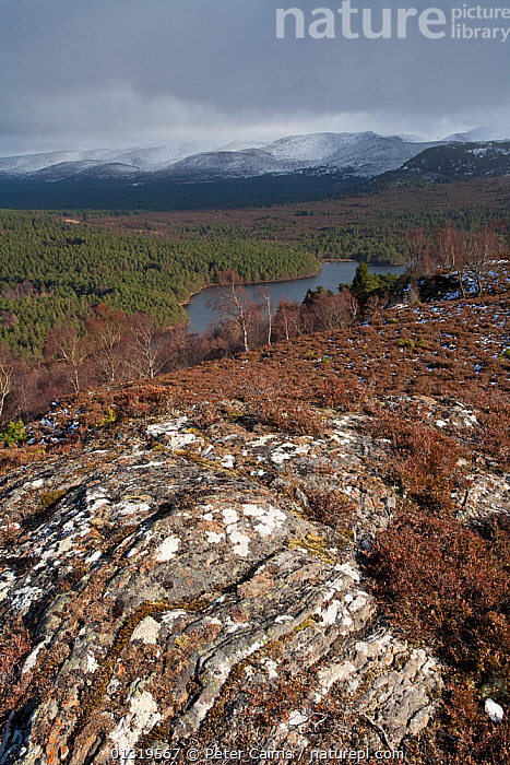 View over Rothiemurchus forest from Ord Ban. The Cairngorms, Scotland, March 2009.  ,  EUROPE,HEATHLANDS,HIGHLANDS,LAKES,LANDSCAPES,MOUNTAINS,SCOTLAND,UK,VERTICAL,WATER,United Kingdom  ,  Peter Cairns