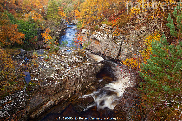 River Tromie flowing through a small gorge in autumn. Cairngorms, Scotland, October 2009.  ,  AUTUMN,EUROPE,FORESTS,LANDSCAPES,NP,RESERVE,RIVERS,SCOTLAND,UK,WATER,WATERFALLS,WOODLANDS,National Park,United Kingdom  ,  Peter Cairns