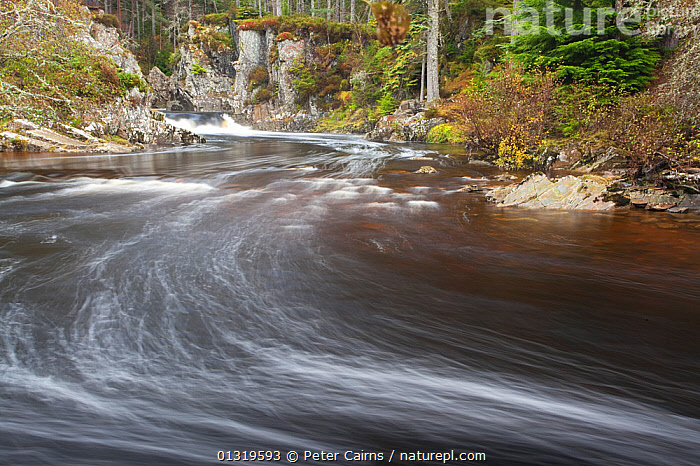 River Pattack in flow. Strathmashie, Cairngorms National Park, Scotland, October 2010.  ,  FORESTS,LANDSCAPES,MOTION BLUR,NP,RESERVE,RIVERS,SCOTLAND,TIME EXPOSURE,UK,WATER,WATERFALLS,WOODLANDS,National Park,Europe,United Kingdom  ,  Peter Cairns