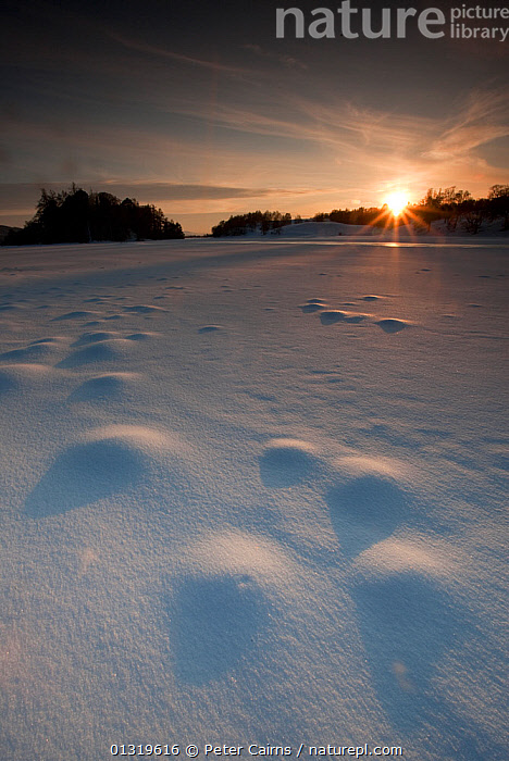 Low winter sun over frozen Loch Insh, Scotland, UK, March 2010.  ,  COLD,EUROPE,FROST,HIGHLANDS,LAKES,LANDSCAPES,SCOTLAND,SNOW,UK,VERTICAL,WINTER,Weather,United Kingdom  ,  Peter Cairns