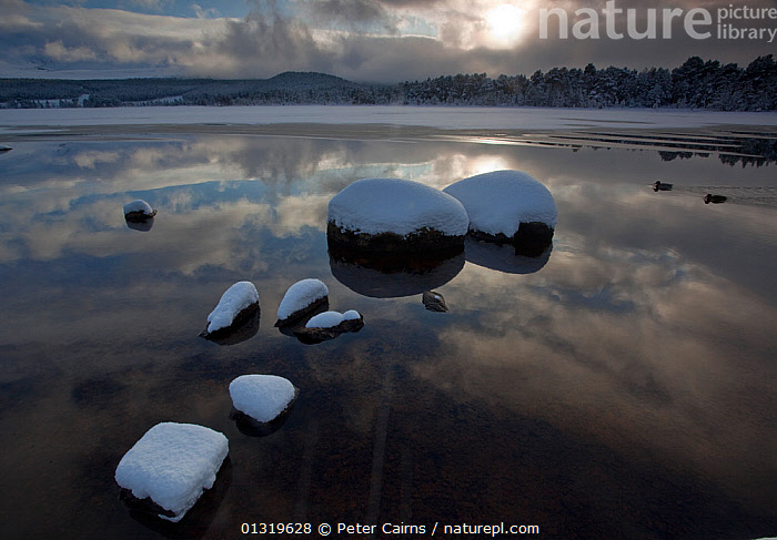 Snow-covered stones in Loch Morlich, Scotland, UK, December 2009.  ,  ATMOSPHERIC,CALM,COLD,EUROPE,HIGHLANDS,LAKES,LANDSCAPES,MIST,REFLECTIONS,SCOTLAND,SNOW,UK,WATER,WINTER,WEATHER ,United Kingdom,core collection xtwox  ,  Peter Cairns