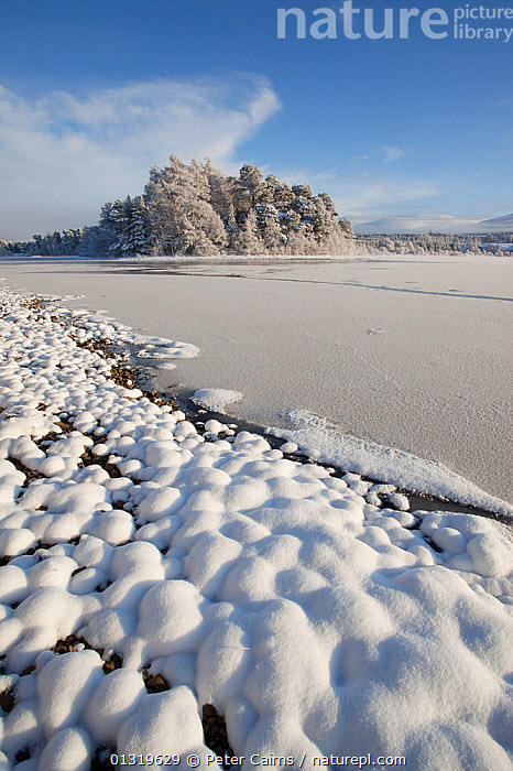 Frozen lakeside of Loch Insh. Cairngorms National Park, Scotland, December 2009.  ,  EUROPE,ICE,LAKES,LANDSCAPES,NP,RESERVE,SCOTLAND,SNOW,UK,VERTICAL,WATER,WHITE,WINTER,National Park,United Kingdom,core collection xtwox  ,  Peter Cairns