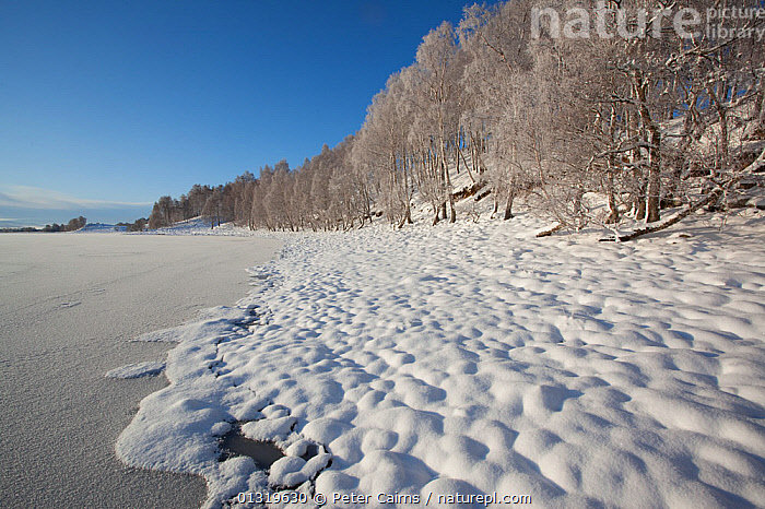 Frozen lakeside of Loch Insh. Cairngorms National Park, Scotland, December 2009.  ,  ATMOSPHERIC,COLD,EUROPE,FORESTS,FROST,HIGHLANDS,ICE,LAKES,LANDSCAPES,RESERVE,SCOTLAND,SNOW,UK,WATER,WHITE,WINTER,WOODLANDS,Weather,United Kingdom,core collection xtwox  ,  Peter Cairns