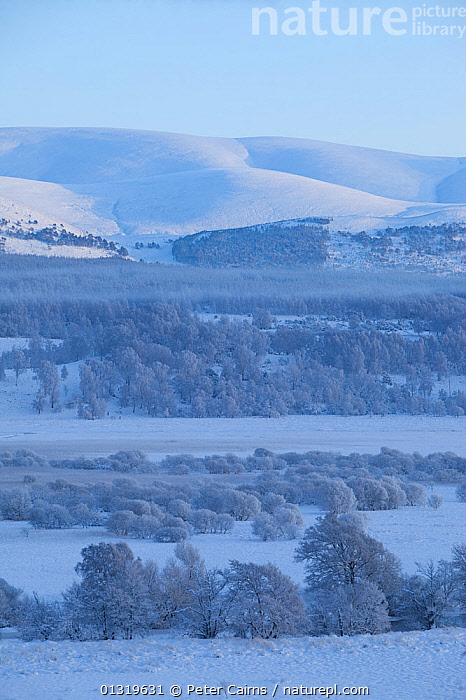 A view over frozen RSPB Insh Marshes Reserve. Cairngorms National Park, Scotland, December 2009.  ,  COLD,EUROPE,FORESTS,FROST,HIGHLANDS,LANDSCAPES,MARCHES,NP,RESERVE,SCOTLAND,SNOW,UK,VERTICAL,WHITE,WINTER,WOODLANDS,Weather,National Park,United Kingdom  ,  Peter Cairns
