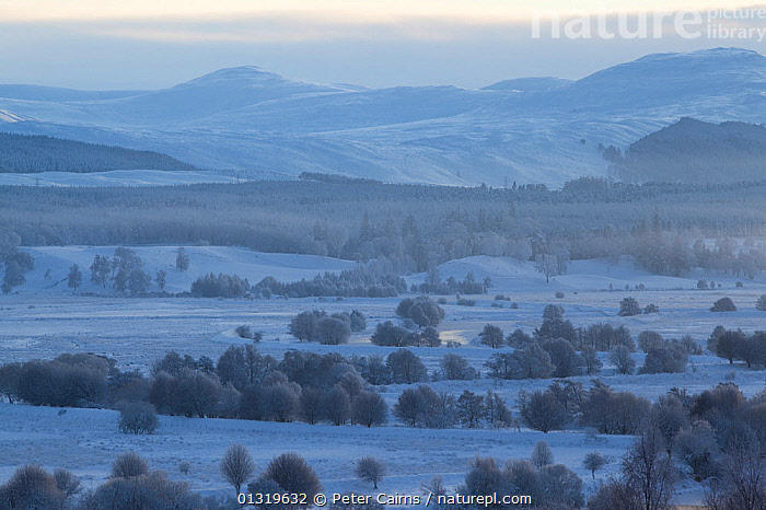 A view over frozen RSPB Insh Marshes Reserve. Cairngorms National Park, Scotland, December 2009.  ,  COLD,EUROPE,FORESTS,HIGHLANDS,LANDSCAPES,MARCHES,MARSHES,NP,RESERVE,SCOTLAND,SNOW,UK,WINTER,WOODLANDS,Wetlands,National Park,United Kingdom  ,  Peter Cairns