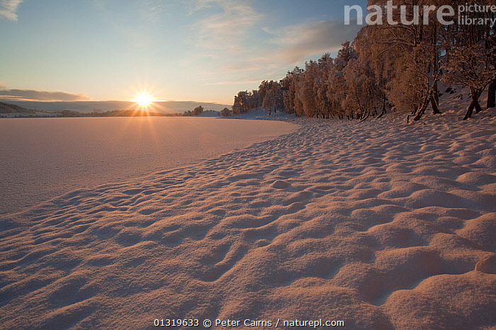 Snow-bound lakeside of Loch Insh. Cairngorms National Park, Scotland, December 2009.  ,  COLD,EUROPE,FORESTS,HIGHLANDS,LAKES,LANDSCAPES,NP,RESERVE,SCOTLAND,SNOW,SUNSET,UK,WATER,WHITE,WINTER,WOODLANDS,National Park,United Kingdom,core collection xtwox  ,  Peter Cairns